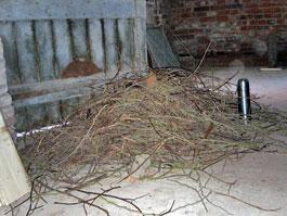 Jackdaw nest rejects
