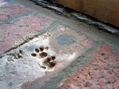 cats paw print