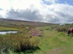 shropshire moors