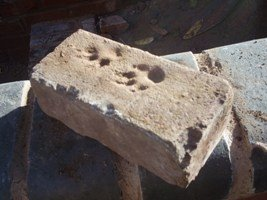 Paw prints in solid brick